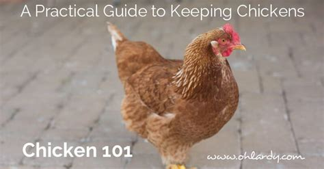 how to care for chickens in your backyard how to care for backyard chickens 28 images how to