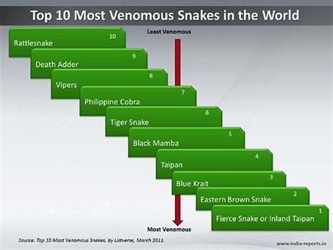 World Top 10 Deadliest Snakes Categories Gt Ppt Slide Best Ppts In The World