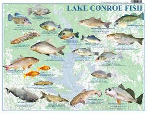 lake conroe map lake conroe fish records