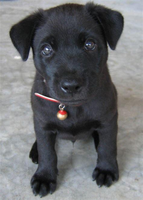 black names puppies black names pethelpful