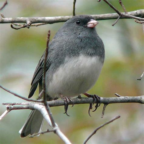 wild ideas the quiet but omnipresent bird of winter