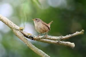 Garden bird watching