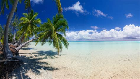 nature landscape beach white sand island palm trees