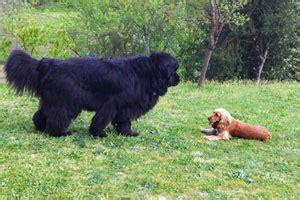 cani consigliati per appartamento agriturismo il cucciolo servizi per i cani