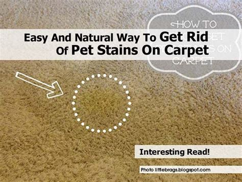 how to clean a seagrass rug pet stains easy and way to get rid of pet stains on carpet
