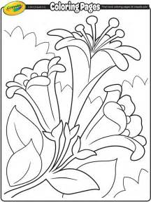 crayola coloring pages for easter easter lilies ii coloring page crayola