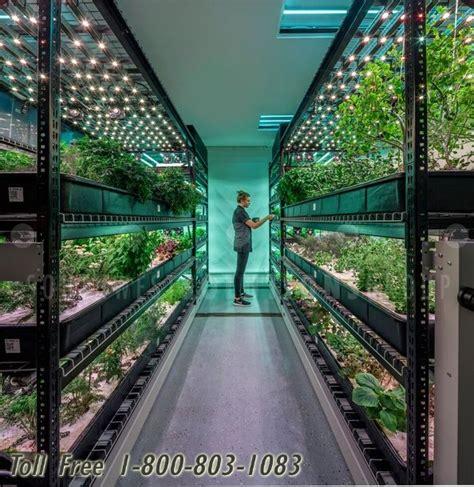 indoor marijuana cannabis high volume growing system