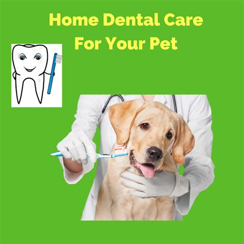 dental care for dogs home dental care for your pet the animal doctor
