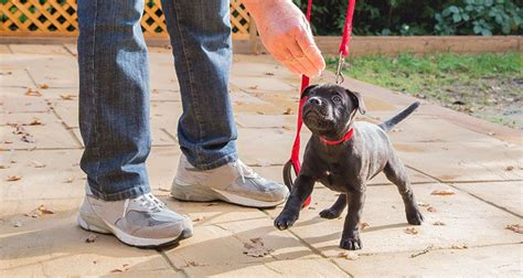 how to your tricks and obedience treat for dogs cesar s way