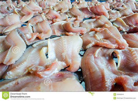 pesce testa di serpente conservazione pesce secco della serpente testa con il