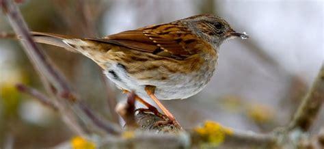 vögel im garten bestimmen vogel im garten bestimmen kreative ideen f 252 r