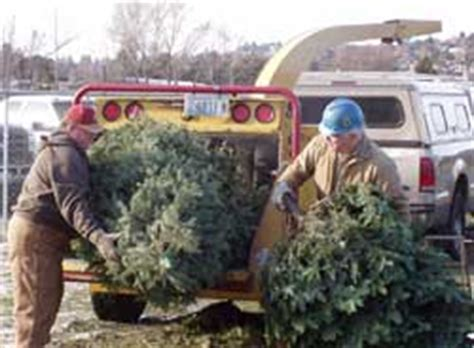 christmas tree recycling tree chipping fund raiser for