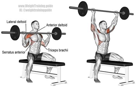 dumbbell bench press muscles worked seated barbell overhead press guide and video weight