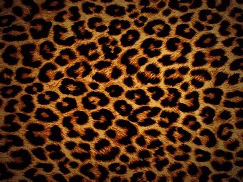 jaguar print wallpaper firmtacami leopard print wallpaper