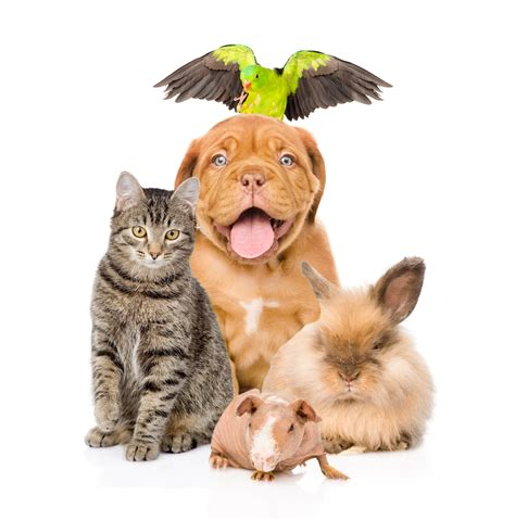 pet sitting pin pet sitting services on