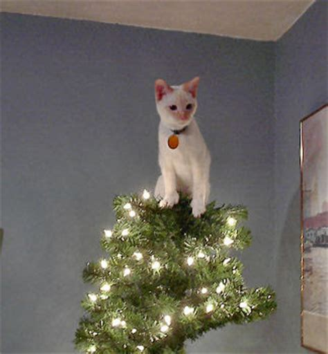 cat first seen christmas tree cat thursday cats trees