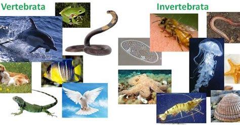 klasifikasi kerajaan hewan  tumbuhan media belajar
