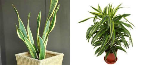 good low light houseplants best houseplants for low light mom foodie