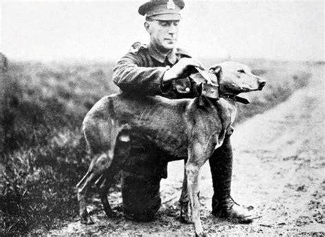 sella pinerolo il ruolo nella storia bauclub asilo per cani a