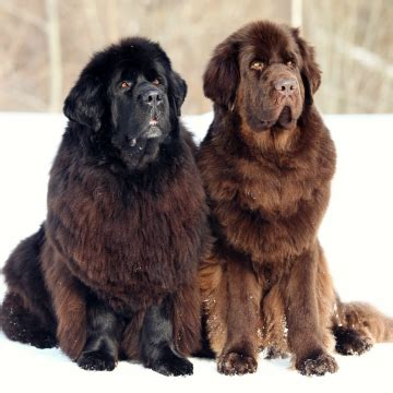 best breeds for small homes top 10 gyerekbar 225 t kutya