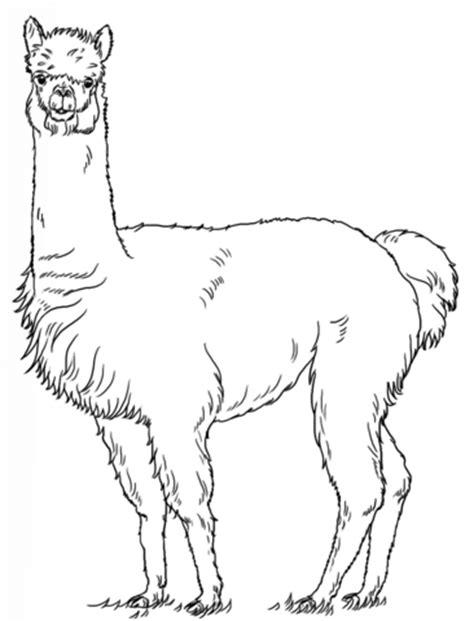 printable version nrl draw 2015 alpaca coloring page free printable coloring pages