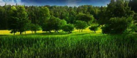 imagenes de bosques increibles 45 incre 237 bles fondos de pantalla de paisajes wallpapers