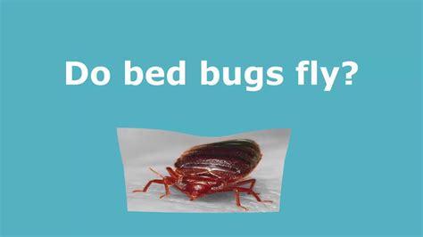 google bed bugs pixels bed bug jt eaton kills bed bug  spray aerosol newest pro version