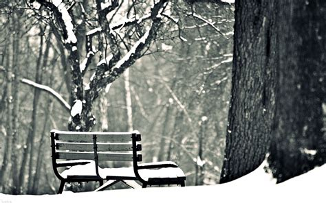 bench snow bench in the snowy park walldevil