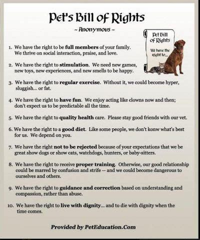 bill of rights section 21 22 best images about bills of rights on pinterest pets