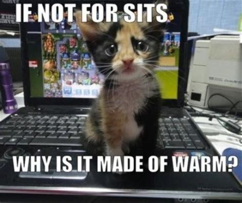 Cat Laptop Meme - cats and laptops jpegy what the internet was meant for