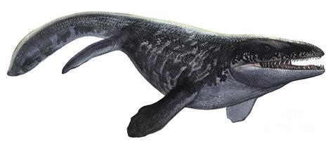Illustration Of A Prognathodon Digital Art by Sergey