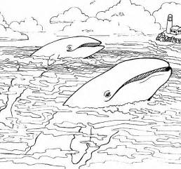 sea animals coloring pages coloringpages1001