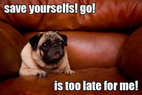 words with pug 449 best images about pug words sayings on pug meme pug and pets