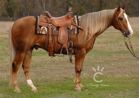 for sale horses foals for sale