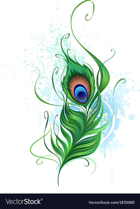 peacock feather royalty free vector image vectorstock