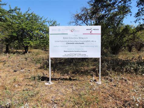conafor estima 500 mdp para impulsar desarrollo forestal en chiapas gobierno gob mx