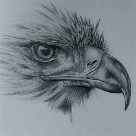 eagle drawing in pencil bird drawings pinterest