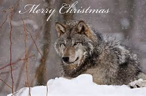 quot christmas card timber wolf quot by michael cummings