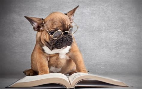 smart dogs top 10 smartest dogs the bully breeds page 2