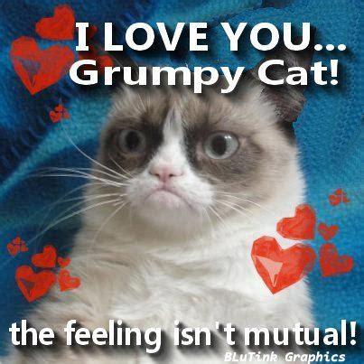 Grumpy Cat Love Meme - grumpy cat i love grumpy cat pinterest