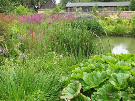 the wetlands garden natural landscaping gardening and landscape design in the catskills and