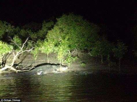 monster crocodile attacks fishing boat massive crocodile spotted at northern territory fishing