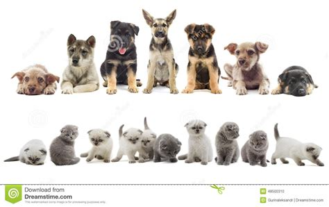 set of puppy set of puppy and kitten stock photo image 48500310