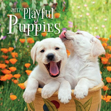 playful puppies playful puppies wall calendar 9781469336626 calendars