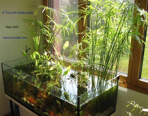 aquarium & nature :: L'aquarium naturel