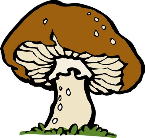 pin cartoon mushroom drawing on pinterest