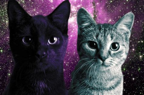 wallpaper hipster cat hipster cat backgrounds tumblr hipster cat backgrounds