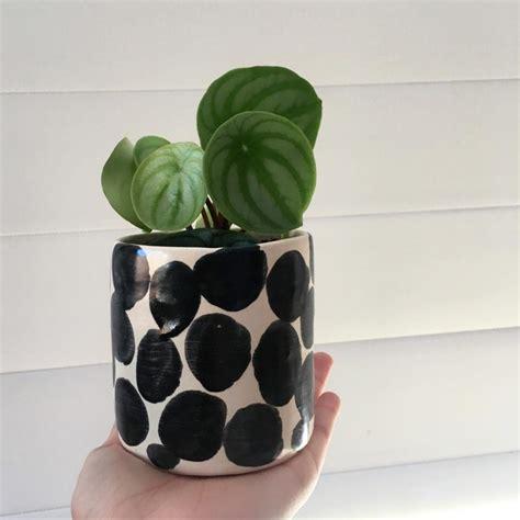 vasi piante design vasi piante design with vasi piante design i vasi