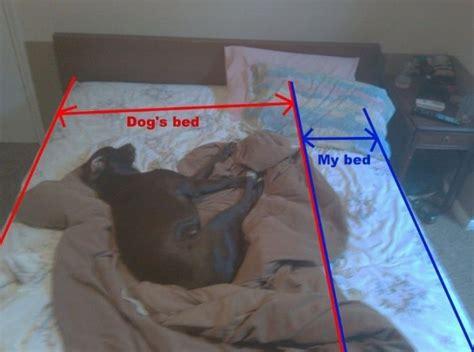dog in bed meme dog on the bed 1funny com