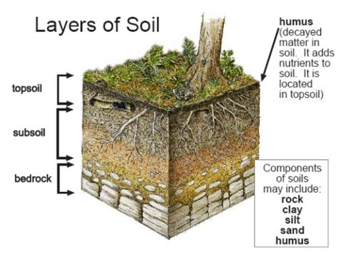 layers of the soil diagram the soil layers and the living organisms science